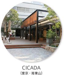 cicada_thumbnail